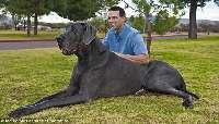 Gb Anjing
